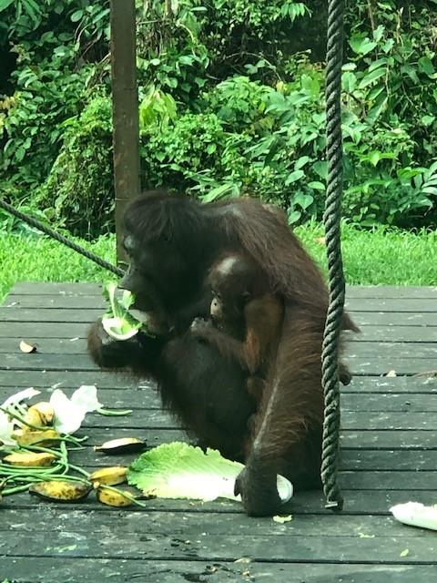 wildlife tour in borneo